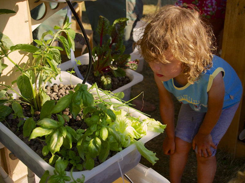 Photo: Aquaponics: Grow Your Own Greens